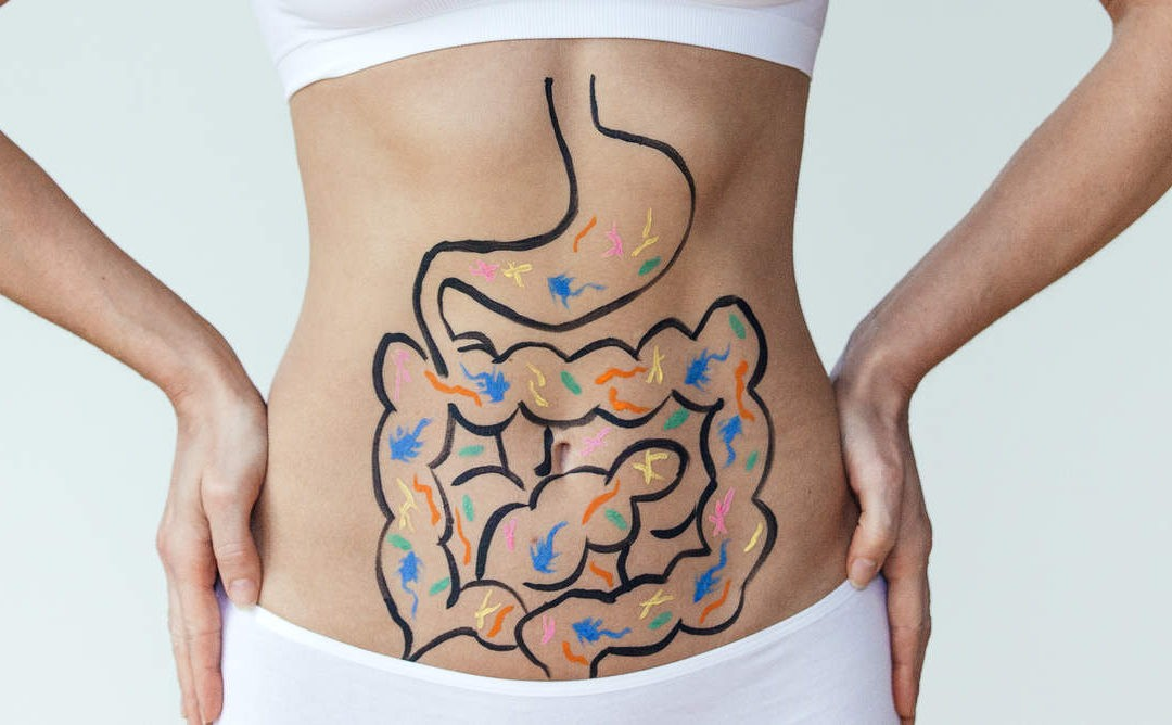 Healthy Digestive Track